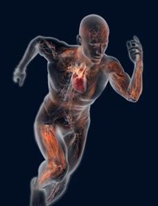 Desenvolvimento motor: da Educação Física ao atleta